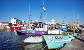 Lien vers l'article «Gourmandises océanes à St Gilles Croix de Vie»