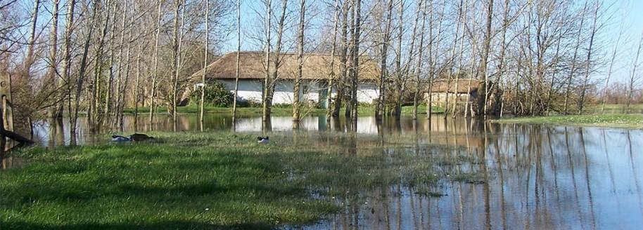 Bourrine à Rosalie - Sallertaine - Vendée