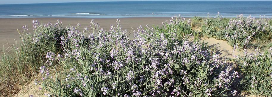 Dune de Saint-Jean-de-Monts et Saint-Hilaire-de-Riez - Vendée - © JCB