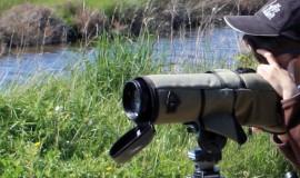 Lien vers l'article «DECOUVERTE… ornithologique»