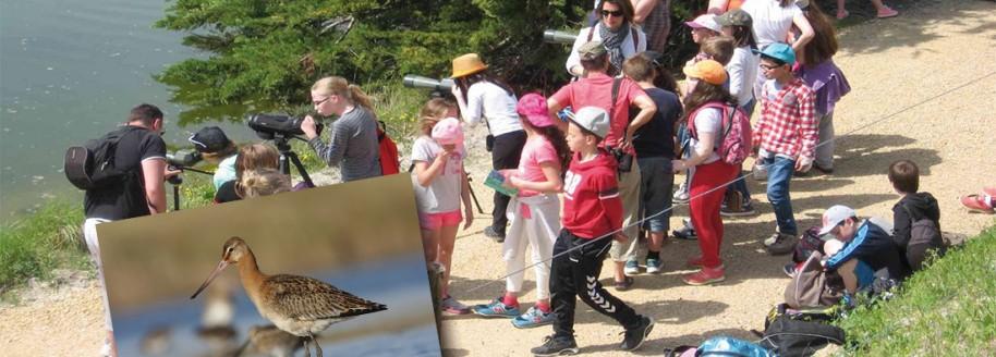 Ornithologie - Île de Noirmoutier - Sorties scolaires et classes de mer en Vendée - © JCB