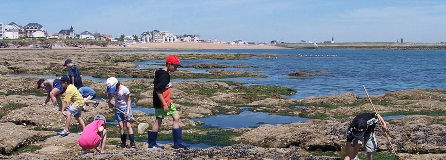 Pêche à pied - Saint-Gilles-Croix-de-Vie - Sortie scolaire et classe de mer en Vendée - © JCB