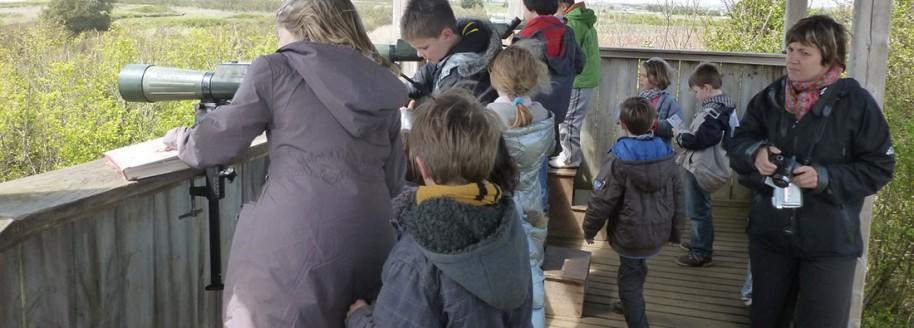 Ornithologie - Île d'Olonne - Sorties scolaires et classes de mer en Vendée