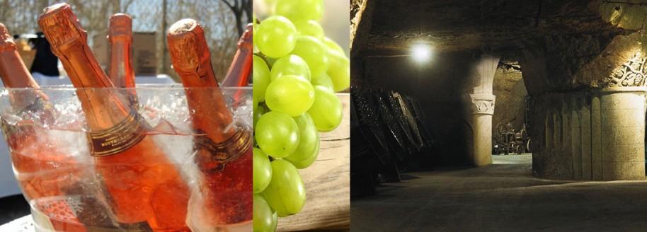 Vignoble du saumurois - Saumur - Maine-et-Loire