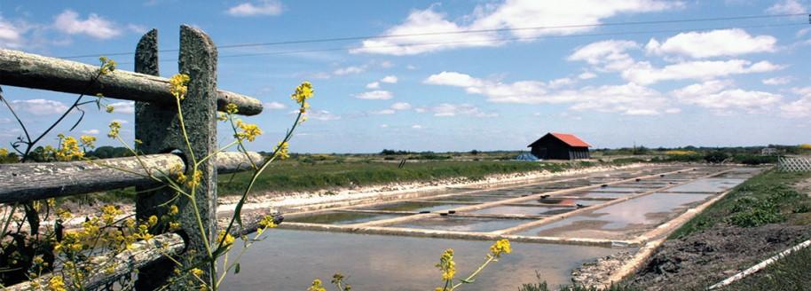 Marais salant - Saline du Recoin - Saint-Hilaire-de-Riez - Vendée - © JCB